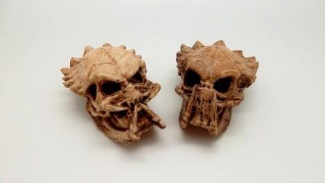 predatorfossilskulls-unknown